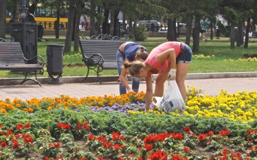Summer Job Grooming Flowers