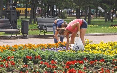 Summer Job Grooming Flowers