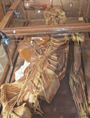 Museum-Raccolta di Cere Anatomiche